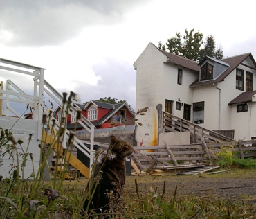 hinterhof12_katze