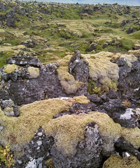 Weiches Moos auf harter Lava