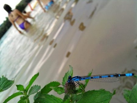 libelle2
