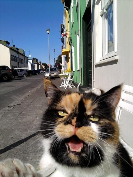 Bless Reykjavik!