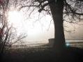 prinzbach_nebel_20121229_7